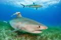 2 shark species 1 shot!