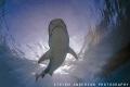 The sun shining, Tiger Sharks make for a perfect day to dive at Tiger Beach - Bahamas