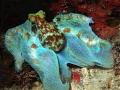 Octopus at night in Utila, Bay Islands, Honduras