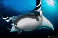 Manta Ray at Socorro Islands  Mexico.  Nikon D7000 / 10mm / f 6.3 / 1/200sec.  Amazing experience diving with huge creatures that are very friendly to divers