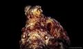 octopus (octopoda) mataking island sabah semporna Shutter 200 F15 ISO100 canon 650D Meikon housing YS03 x2 Standard lens 55mm
