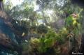 Freshwater ambiant