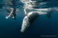 Whale calf ballet