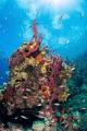 Spongy Reef