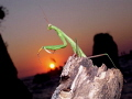Mantidae Topside lucky sunset photo from my diving center at Korumar Bay.