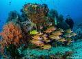 Blue Magic  dive site in the Dampier Strait  Indonesia