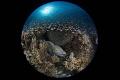 I'm the Supper Star./AKA Island, Okinawa,/ Canon 5D MarkIII, 8-15mm fisheye lens,Sea&Sea housing,Inon Z240*2, F20,1/200,ISO200