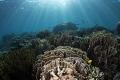 Reef scene at Tetawa Besar  Komodo