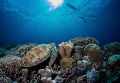 Serene Reef Scene