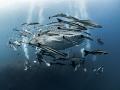 OK. So, it's complicated alright!  Whale Shark - Rhincodon typus  Sail Rock, Thailand