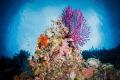 Seascape of a Wakatobi reef