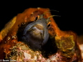 Blenny at the bridge span