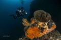 mediterranean underwater landscape........