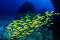 Underwater hills