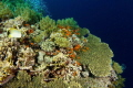 A view of Daedalus Reef in the Rd Sea Egypt