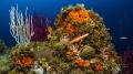 mediterranean underwater landscape