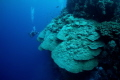 A wide angle view of giant coral formations in the Red Sea.