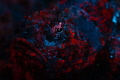 Scorpionfish Fluorescence