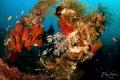 A diver explores the remains of the USS Liberty, Tulamben, Bali.