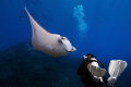 This picture is of my girlfriend and a Manta Ray, she was very nervous as she had only done 12 dives but she soon relaxed when she saw this graceful animals. I managed to capture the moment she came face to face for the first time in her life.