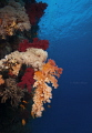 St.John Reef @ Redsea