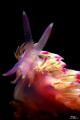 pink flabeline (slightly croped)