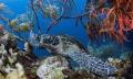 Resting Green Sea Turtle