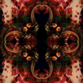 clownfish hiding at softcoral