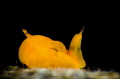O R A N G I E
