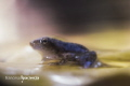 Froggy slow-motion.