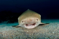 The smiling Leopard shark