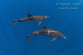Dolphins in the Blue, Isla Contoy Mexico