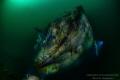 Aquila WW2 Wreck 40meter depht