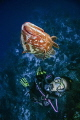swimming and having fun with a nassau grouper