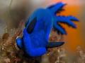 The Blue Nudi