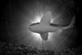 Leopard Shark Black and white sunburst