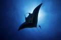 Into the Blue/Giant Manta/ Socorro, Mexico/Canon 5D MarkIII, 16-35mm lens,F16,1/200,ISO200