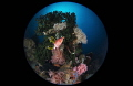 Reefscapes/Lembeh strait  Indonesia  Canon 5D MarkIII  8 15mm fisheye lens Sea Sea housing Inon Z240 2  F16 1/160 ISO320