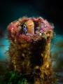 tupefish