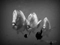 3STOOGES Borneo Divers