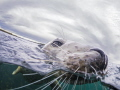 Split Seal