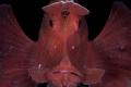 Paddle flap Scorpionfish/Anilao   Philippines/Canon 5D MarkIV  100mm macro Lens.