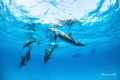 Dolphin with family swiming