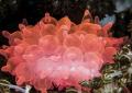 Red anemone . Komodo. Nikon D200 . 60 macro . Two strobo