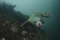 A cute seal at the Farn Islands UK