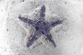 starfish sinking in sand