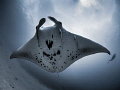 This one ...