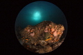 Cold and colorful/Aliwal Shoals,Durban,South Africa/Canon 5D MarkIII, 8-15mm fisheye lens,Inon Z240*2,