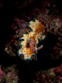 Lurker