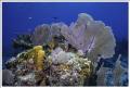Beautiful reef at Half Moon Caye, Belize using sigma 10mm fisheye with 2 Ikelite strobes. Nikon D810 Aquatica Housing.